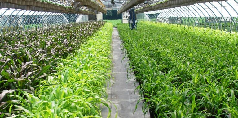 Riverside-Greenhouses-Allamuchy-NJ-Millet