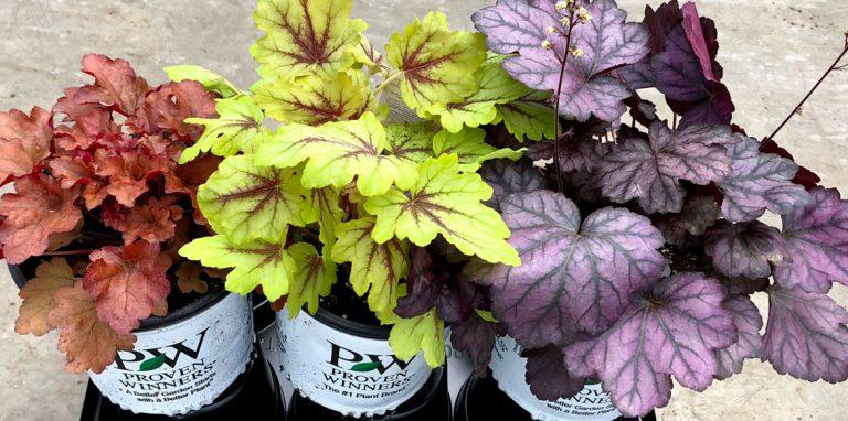 riverside-growers-allamuchy-nj-proven-winners-pw-03