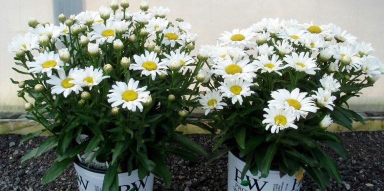 riverside-growers-allamuchy-nj-proven-winners-pw-04