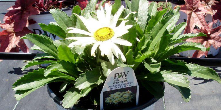 riverside-growers-allamuchy-nj-proven-winners-pw-07