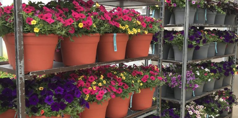 "Riverside-Greenhouses-Allamuchy-NJ-12"" Combos"