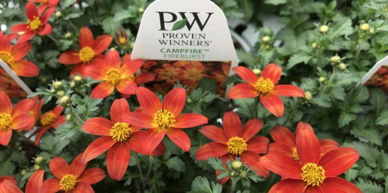 Riverside-Greenhouses-Allamuchy-NJ-Proven Winners-Bidens