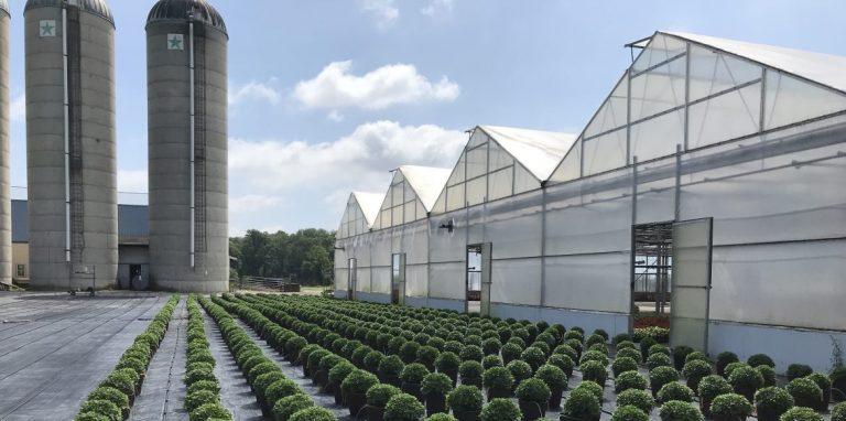 Riverside-Greenhouses-Allumuchy-NJ-Mums