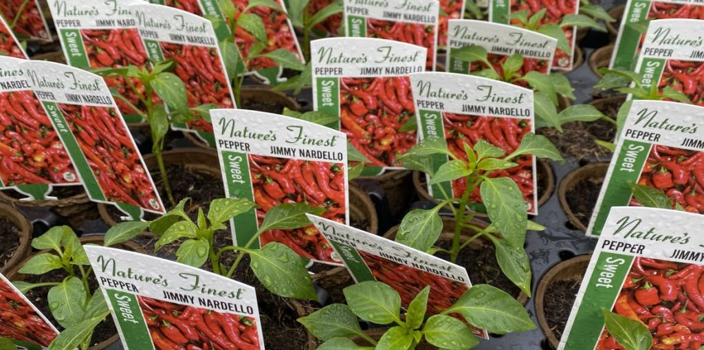 Riverside-Greenhouses-Allamuchy-NJ-Spring-Peppers