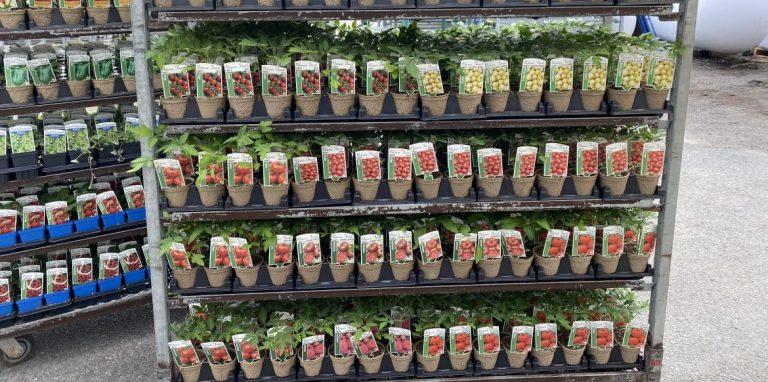 Riverside-Greenhouses-Allamuchy-NJ-Spring-Vegetables