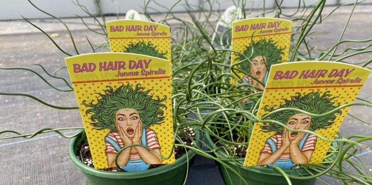 Riverside-Greenhouses-Allamuchy-NJ-Spring-Grass