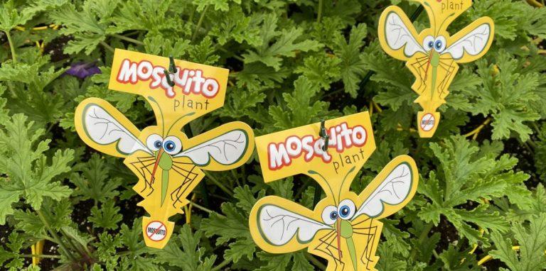 Riverside-Greenhouses-Allamuchy-NJ-Spring-Mosquito