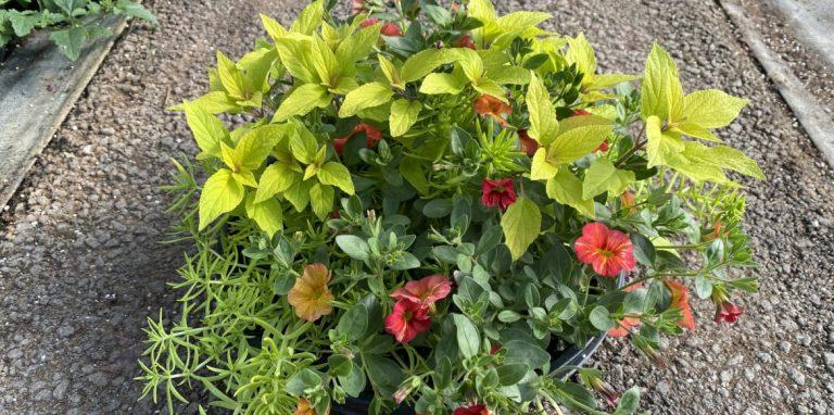Riverside-Greenhouses-Allamuchy-NJ-Spring-Plant-Pies